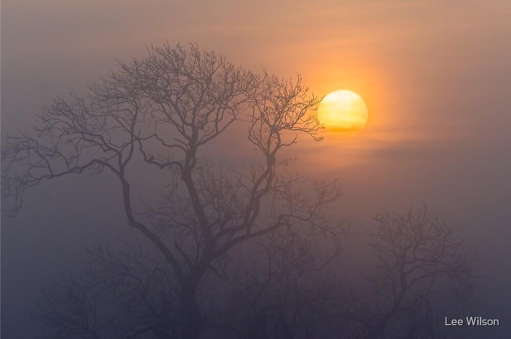 Misty Morning by Lee Wilson