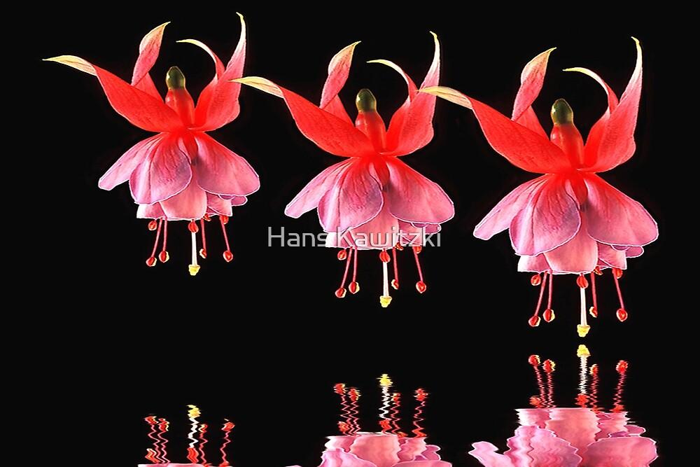 1505 Dancing Fuchsias by Hans Kawitzki