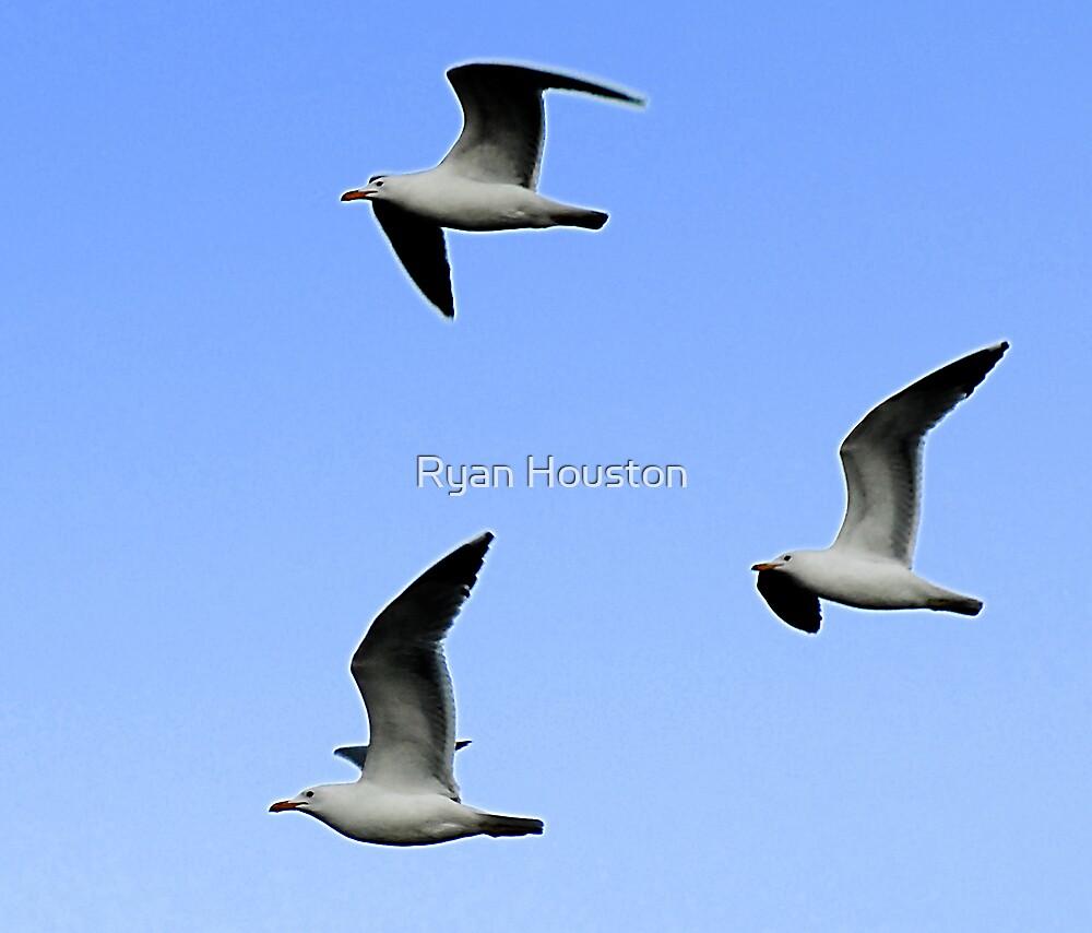 Seagull Trifecta by Ryan Houston
