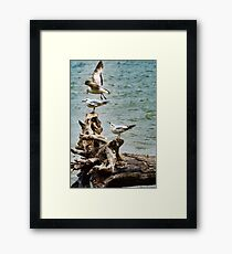 Two On-One Off Framed Print