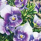 Purple and White Pansies by chromaddict