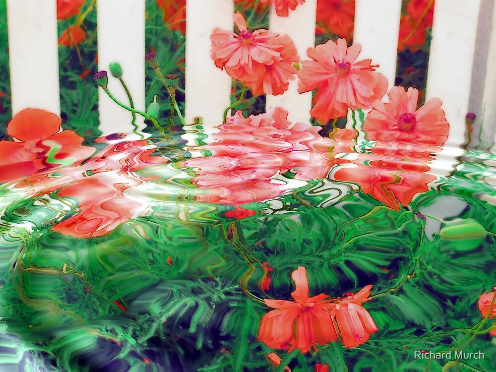 Poppy Ripples by Richard Murch