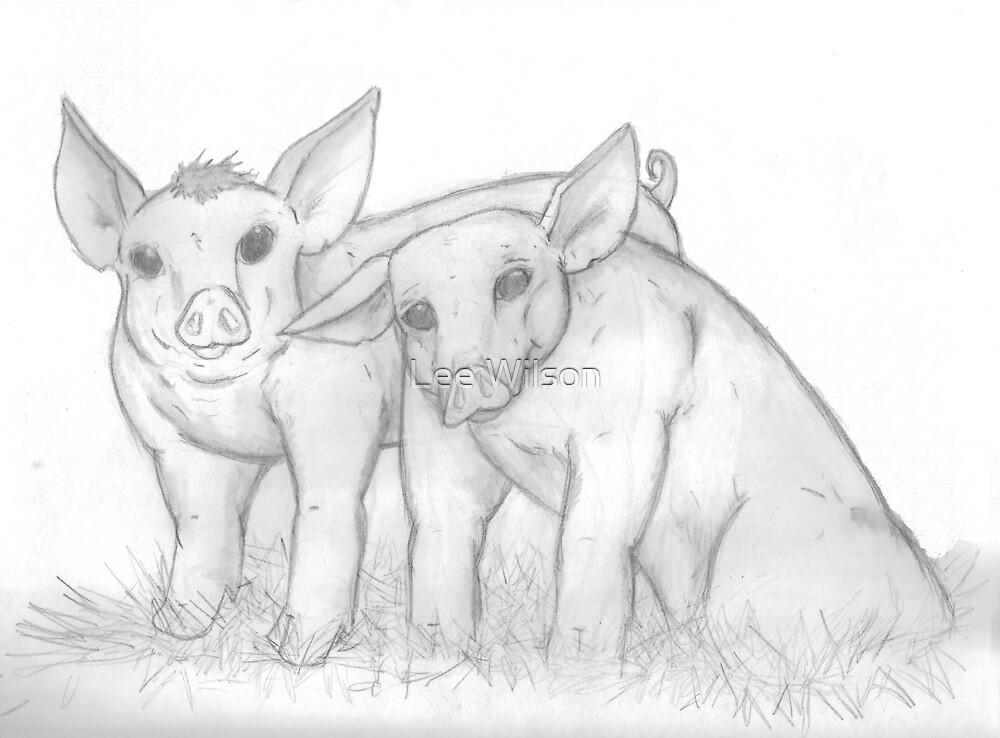 Pigs by Lee Wilson