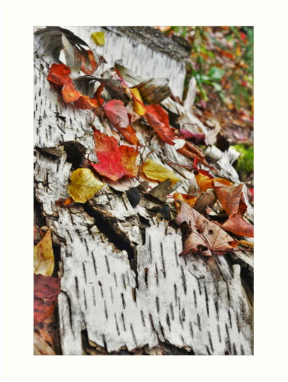 Fallen Leaves by rawenergy