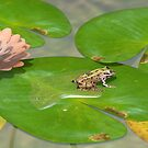 Southern Leopard Frog by Ken Gilliland