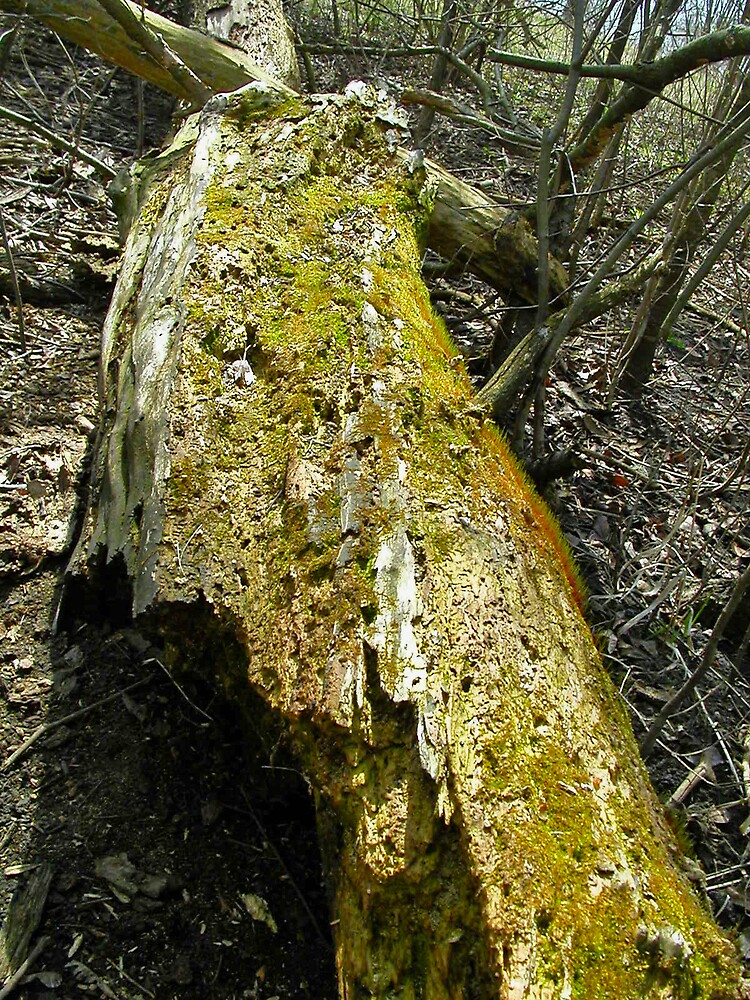 Mossy Log by kauisyndrome
