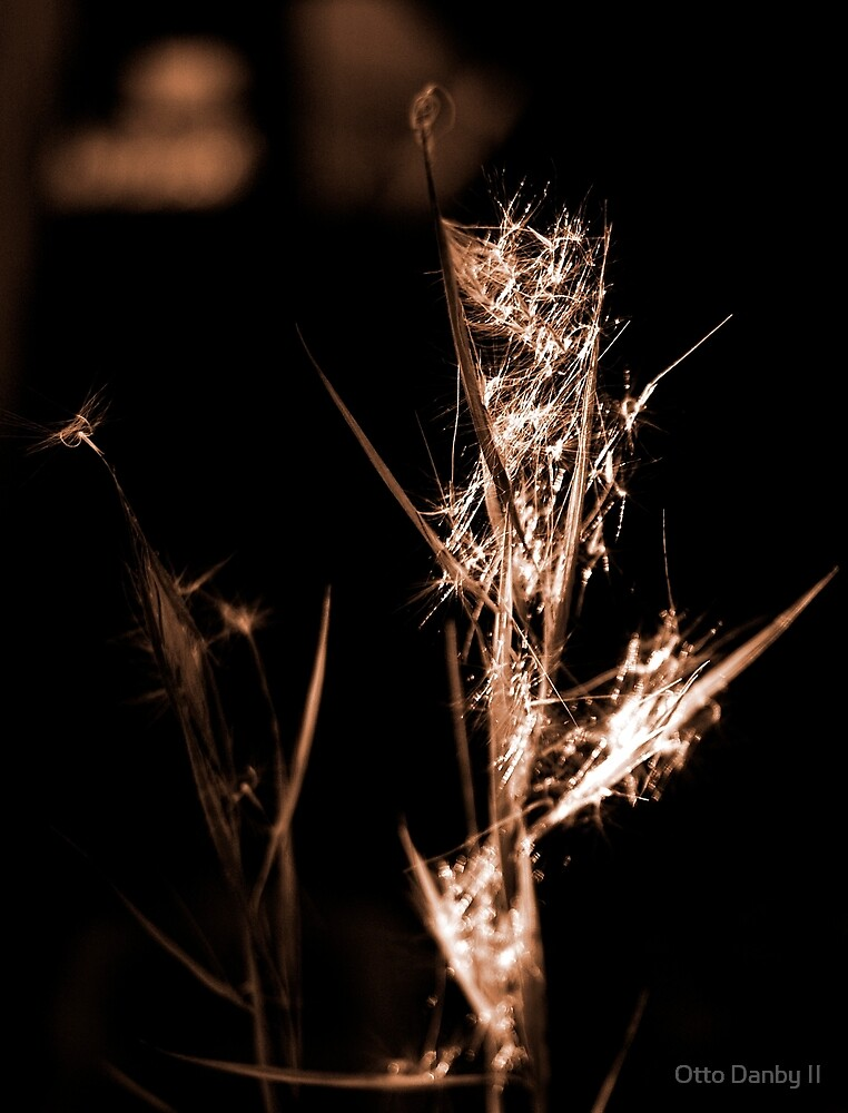Weed in Sepia by Otto Danby II