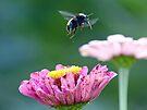 Flight of the Bumblebee by FrankieCat
