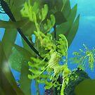 Sea Dragon by hallucingenic
