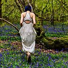 A Walk Through The Blue Bell Woods  by MarcW
