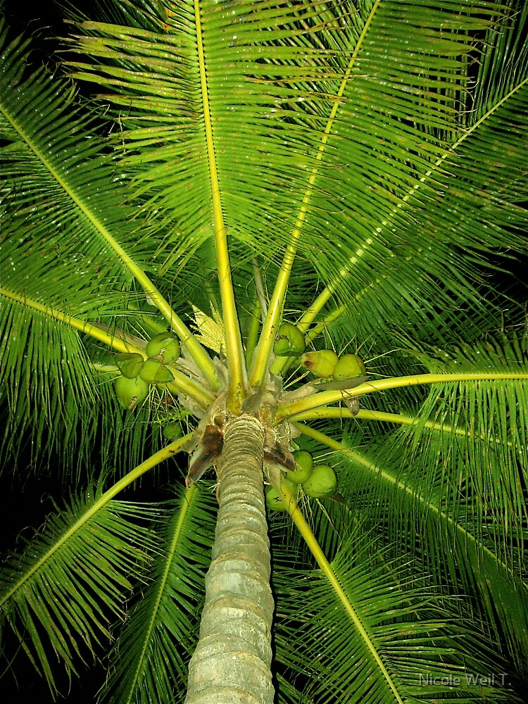 Koo Koo For Coconut... by Nicole Weil T.