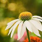 Summer Sunshine by Anita Pollak