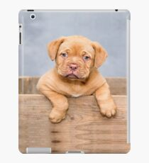 DOG-1 iPad Case/Skin