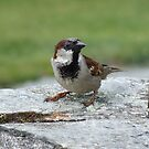 Just a sparrow by Michelle Dewis