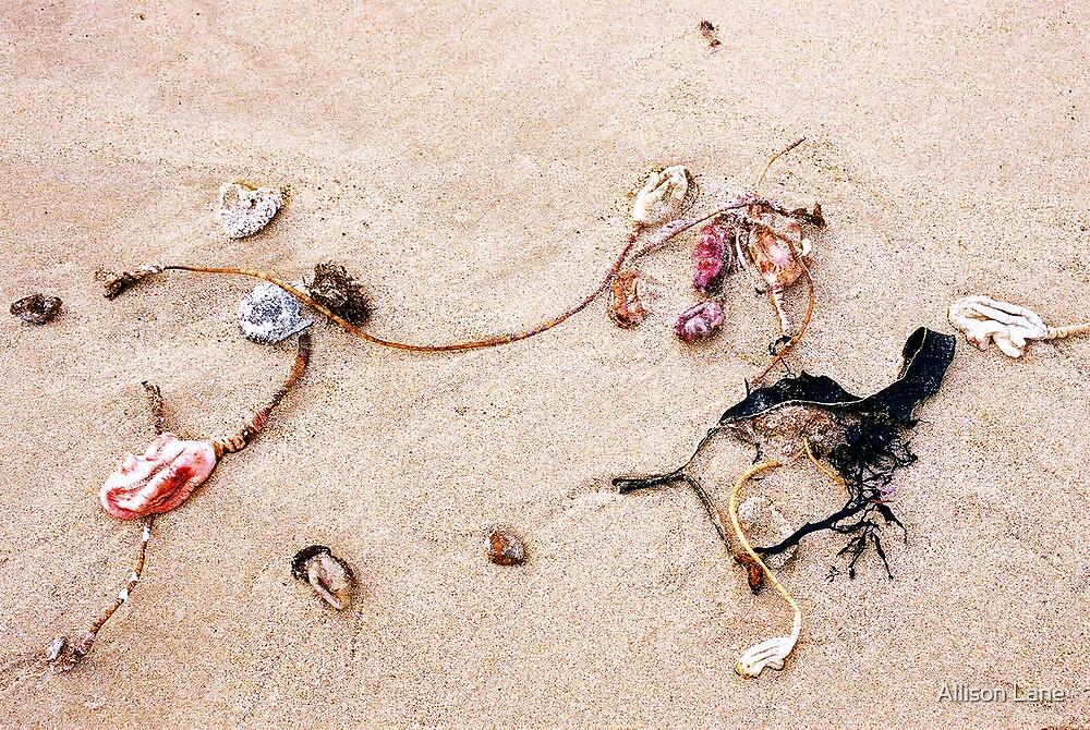 Sea Shapes by Allison Lane