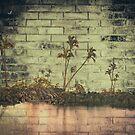 Planter of Palms  by WhiteDove Studio kj gordon