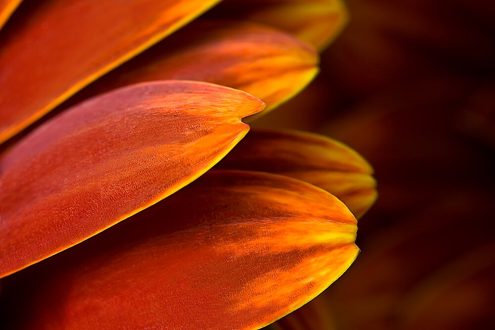 Flame Tips by Margaret Barry