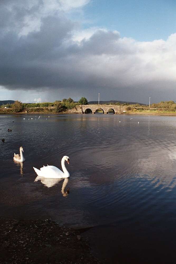 Swans@Ballydehob by southernpa