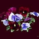 Maroon And Purple Pansies by Susan Savad