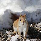 spring nut by debfaraday