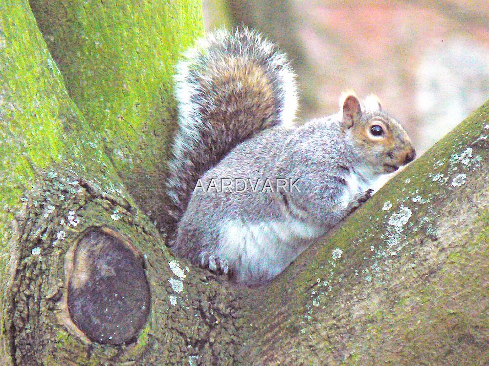 Squirrel In A Tree - York's Museum Gardens by AARDVARK
