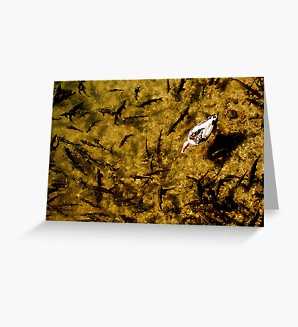 Fish Pond Greeting Card