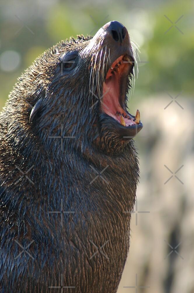 Sea Lion Yawn by ApeArt
