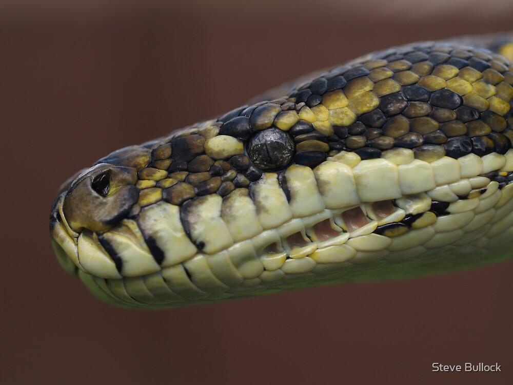 Carpet Python by Steve Bullock