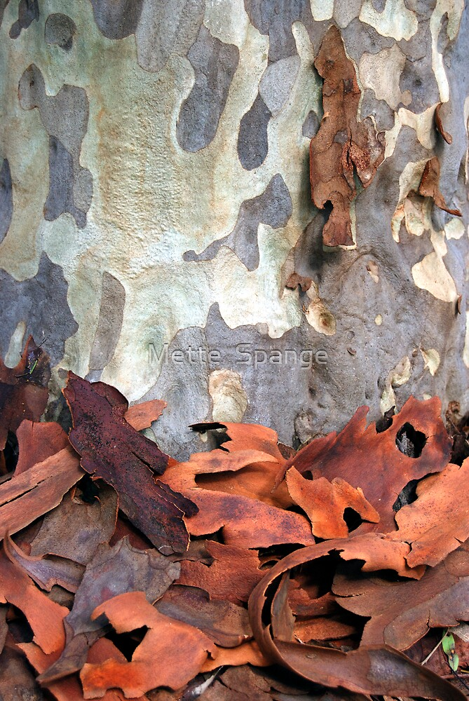 Quot Spotted Gum Tree Australia Quot By Mette Spange Redbubble