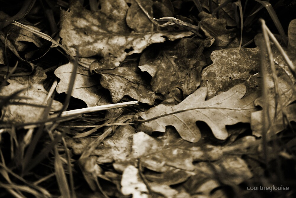 Leaves by courtneylouise