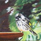 New Holland Honeyeater chick! Oil painting on board.  by Rita Blom