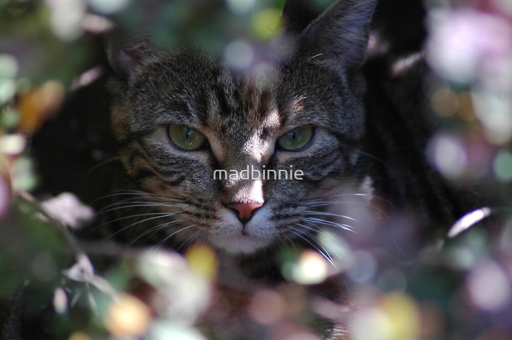Fudge the Cat by madbinnie