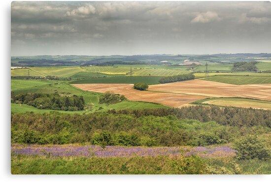 View Eggardon Hill Dorset UK by Pauline Tims
