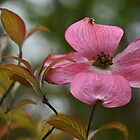 Red Dogwood by Poete100