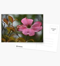 Red Dogwood Postcards