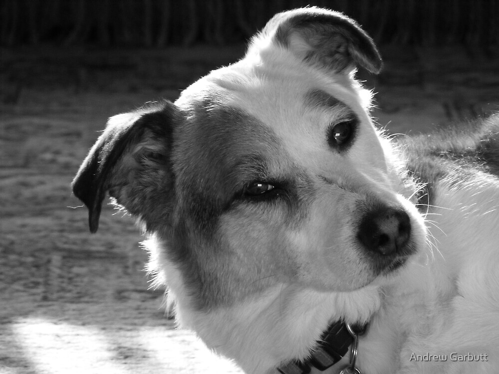 My dog by Andrew Garbutt