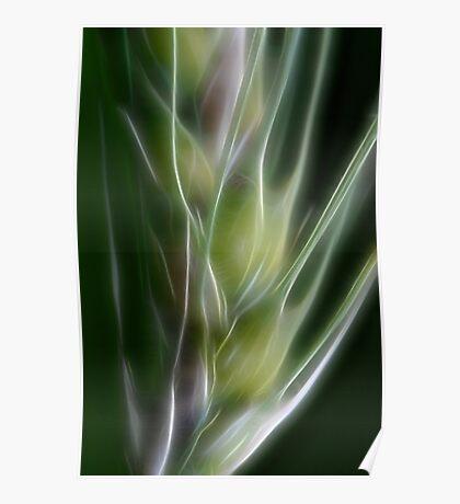 Fractal Grass Seedhead Poster