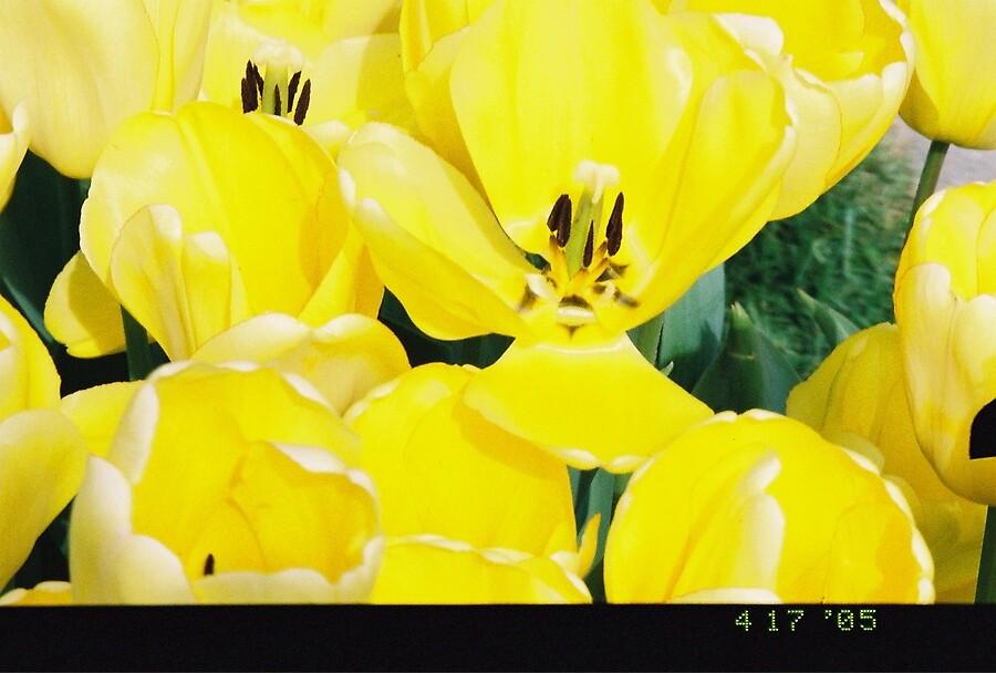 Yellow Bud by svbjade