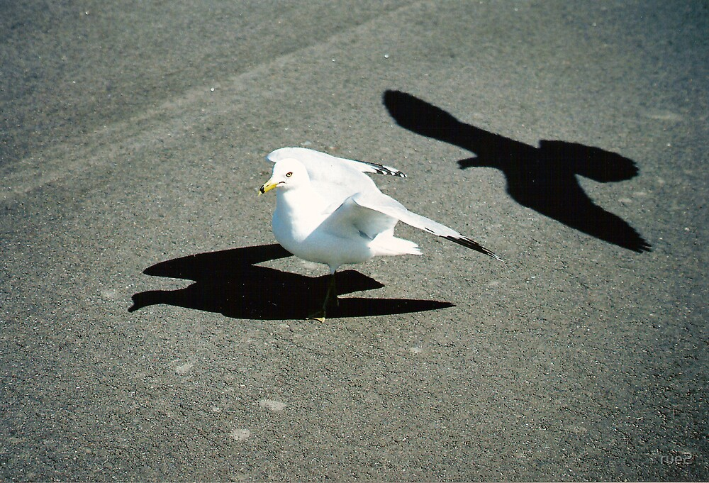 Seagull and shadow by rue2
