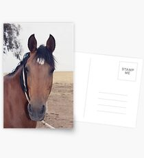 """Fizzy"" standing still . Postcards"