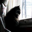 CAT ALONE WINDOW by SofiaYoushi