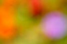 Blurred Flowers # 314 by Larry Costales