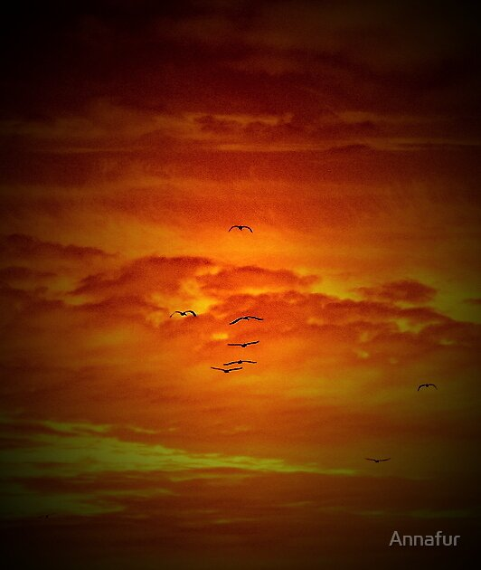 Sea Gull Sunset  by Annafur