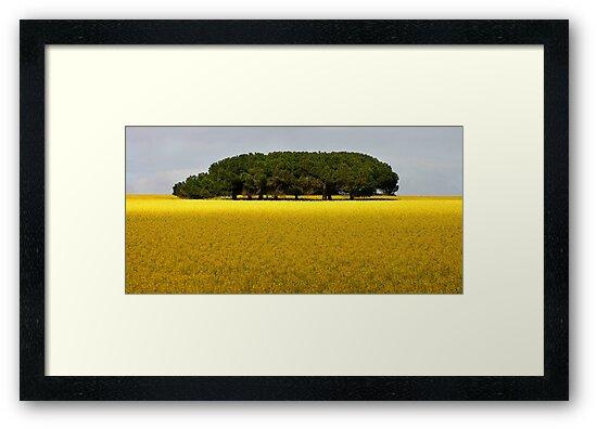 1481 Trees in canola Field by Hans Kawitzki