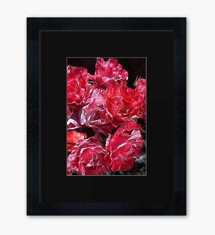 Fresh Roses For You Framed Print