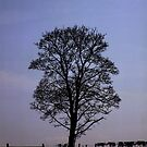 Silhouettree by Yampimon