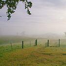 Early Morning Mist by Allenjohn