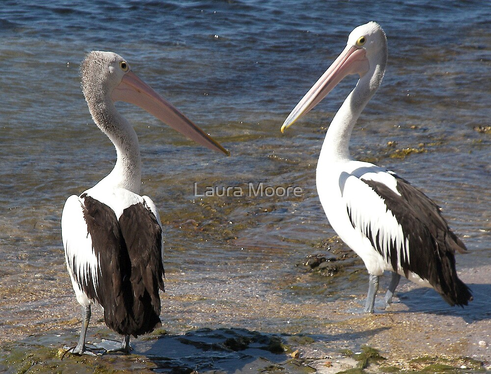 Two Pelicans by Laura Moore