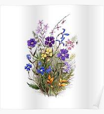 Vintage Wildflowers Poster