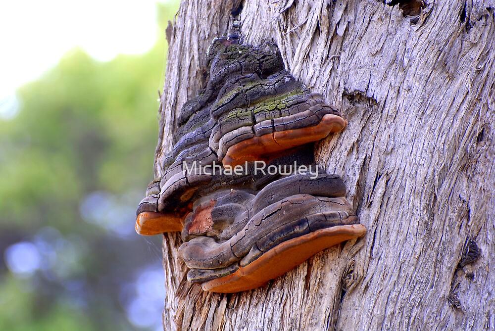 Tree Wart by Michael Rowley